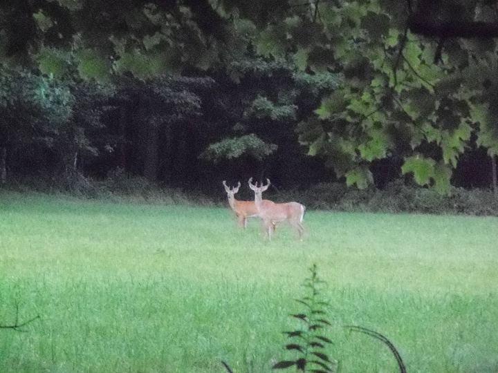 130404_deer
