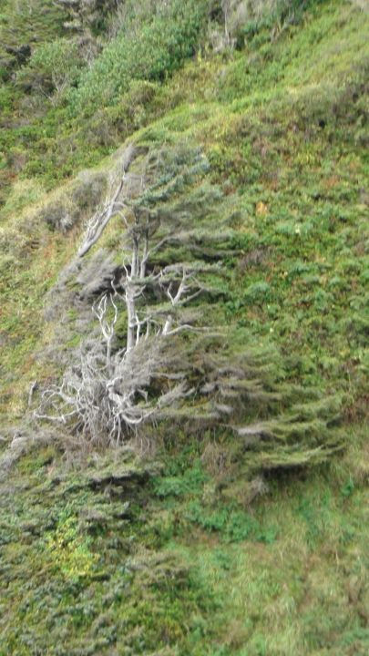 130426_stump