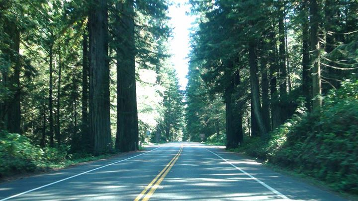 130515_forest_road
