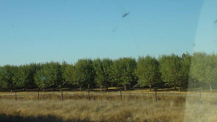 130523_tree_farm