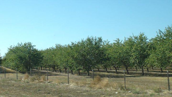 130529_trees_grove