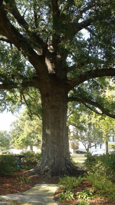 130225_big_tree