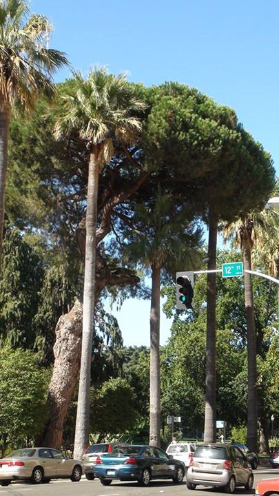 130602_palm_trees_traffic_light