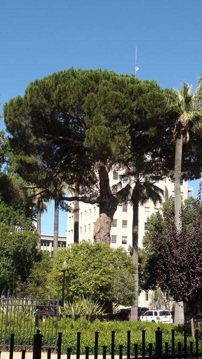 130603_park_palm_building