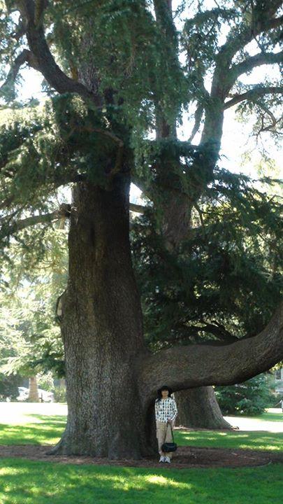 130722_hideko_tree