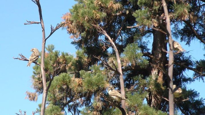 130724_tree_top