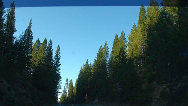 130814_tall_trees