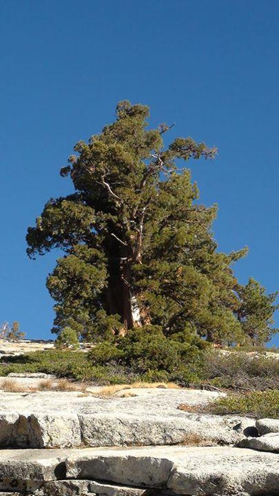 130821_big_pine