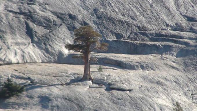 130831_rocky-pine