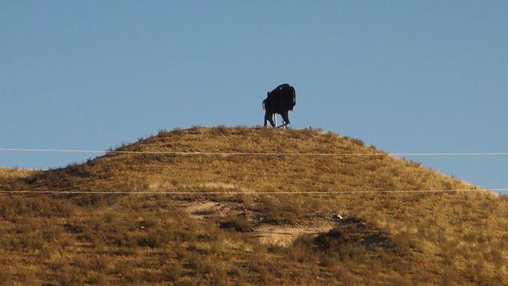 130918_buffalo-on-a_hill