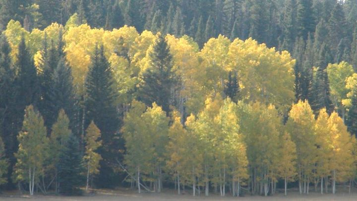 130206_fall_trees