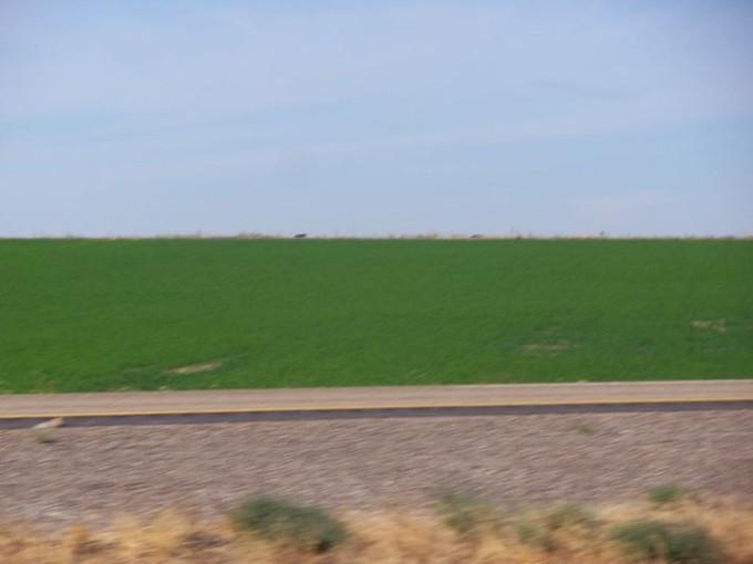150110_green_field