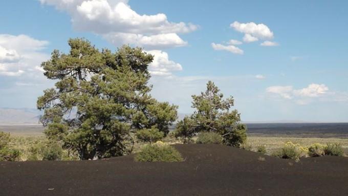 150130_desert_tree