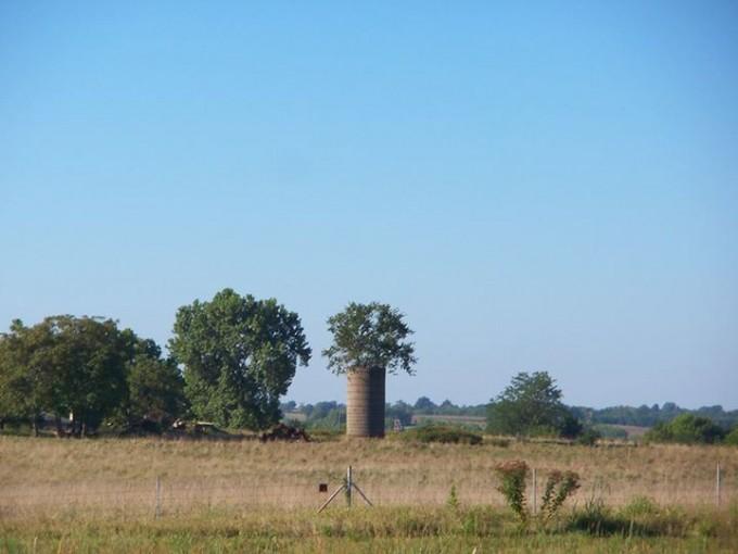 151026_tree_in_silo